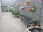 Vasara - žydi gėlės