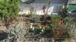 Pataisos įstaigų žaliojoje oazėje įsibėgėjo pavasario darbai
