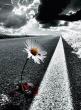 Gyvenime svarbu sugebėti laiku sustoti...