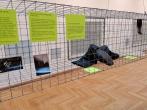 Pusiaukelės namų nuteistieji lankėsi M. K. Čiurliono dailės muziejuje