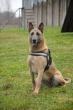 Narkotines medžiagas surasti padėjo šuo Saira